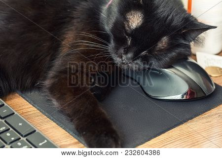 Black Cat Sleeping On The Computer Mat With A Computer Mouse Under Her Cheeck. Computer Accessuars A