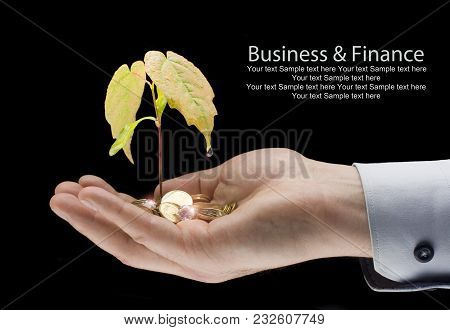 Money And Plant With Hand - Finance New Business > Growing Money On The Palm - Profit