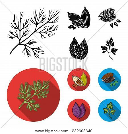 Dill, Cocoa Beans, Basil.herbs And Spices Set Collection Icons In Black, Flat Style Vector Symbol St