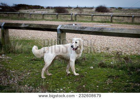 White Nice Dog