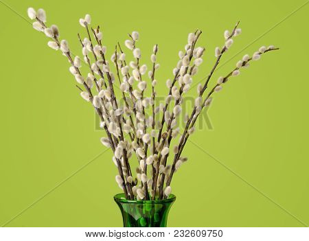 Willow Bouquet With Pussy Willows, In Glass Vase, On Green Background.  Bunch Of Branches With Furry
