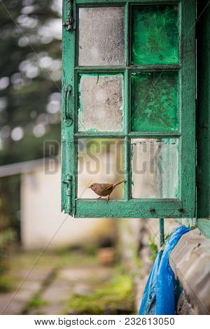 Sparrow Photographed In A Broken Green Glass