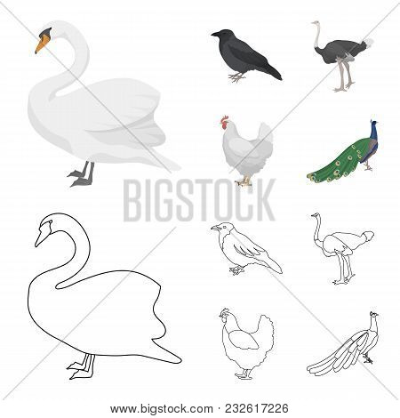 Crow, Ostrich, Chicken, Peacock. Birds Set Collection Icons In Cartoon, Outline Style Vector Symbol