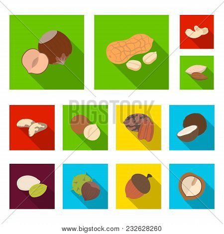 Different Kinds Of Nuts Flat Icons In Set Collection For Design.nut Food Vector Symbol Stock  Illust