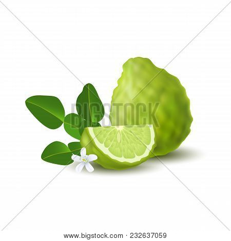 Isolated Colorfull Green Whole And Slice Of Juicy Bergamot, Kaffir Lime With Green Leaves, White Flo