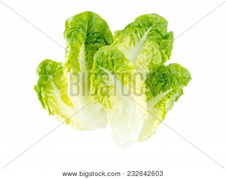 Green Lettuce Salad Leaves Isolated On White