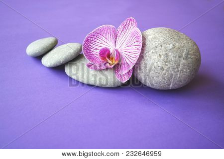 Spa stones and beautiful purple orchid flower on a topical violet background.