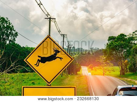 Caution ! Wildlife Crossing Sign Beside Asphalt Road Near Small Hill And Green Grass Field. Car Of T