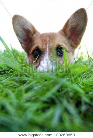 cute dog at a park poster