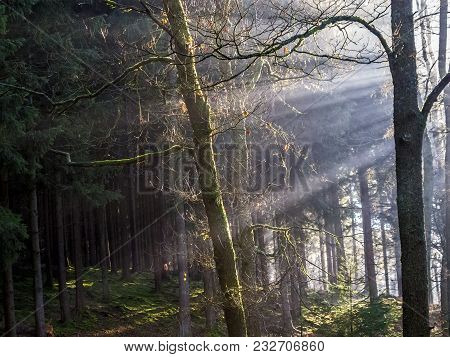 Sun Rays Through The Bare Branches Of Trees In A Dense Belgian Forest