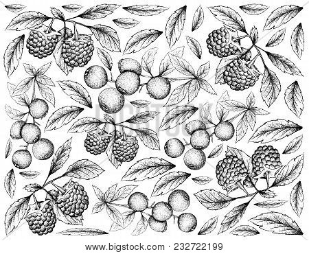 Berry Fruit, Illustration Wall-paper Background Of Hand Drawn Sketch Of Bilberries And Blue Raspberr