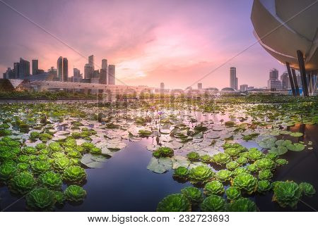 Singapore - April 29, 2016: Purple Skyline Of Singapore View From Pond With Water Lilies Near Artsci