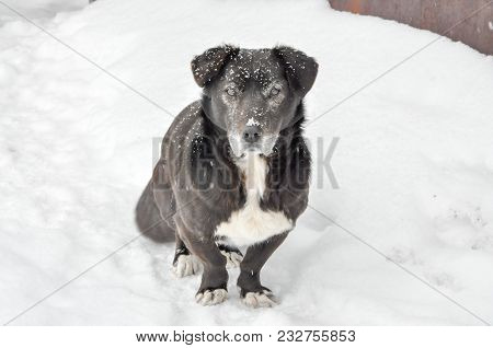 poster of The black pooch is on the white snow