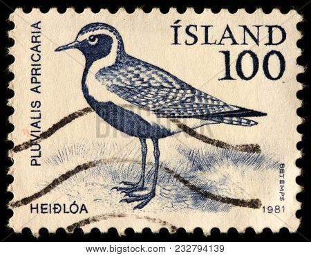 Luga, Russia - January 16, 2018: A Stamp Printed By Iceland Shows European (or Eurasian) Golden Plov