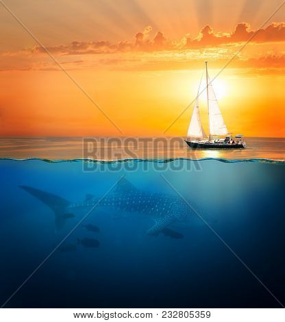 Half Underwater Shot With Whale Shark And Yacht Sailing At Sunset