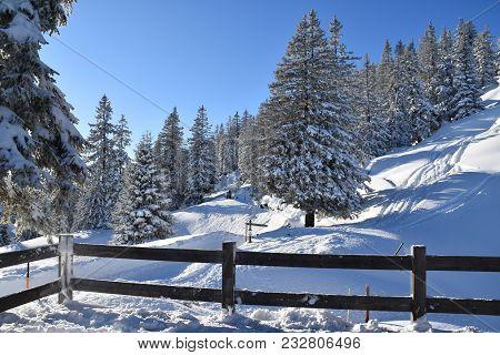 Ein Blick In Den Verschneiten Wald In Den Alpen