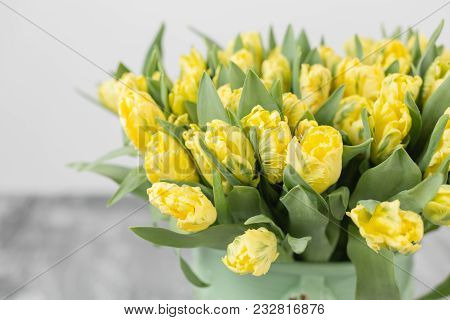 Tulips Of Yellow Color In Green Vase. Big Buds Of Multicoloured Tulips. Floral Natural Backdrop. Bic