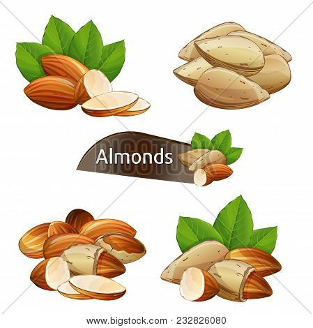 Almond Kernel With Green Leaves Set Isolated On White Background Illustration. Organic Food Ingredie