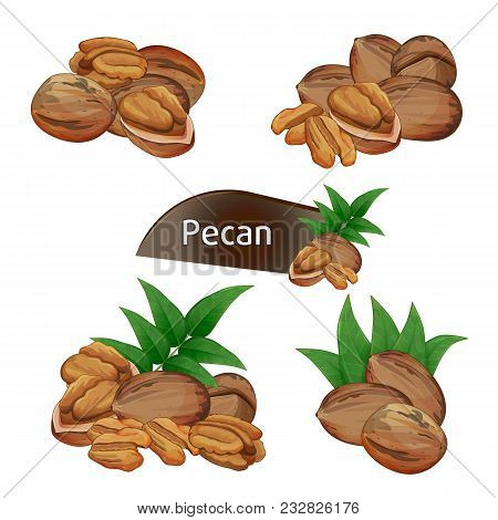Pecan Kernel In Nutshell With Green Leaves Set Isolated On White Background Illustration. Organic Fo