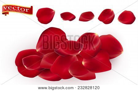 Red Rose Petals Set, Isolated On White, Vector Illustration. Red Rose Petals Vector High Detail. Ros