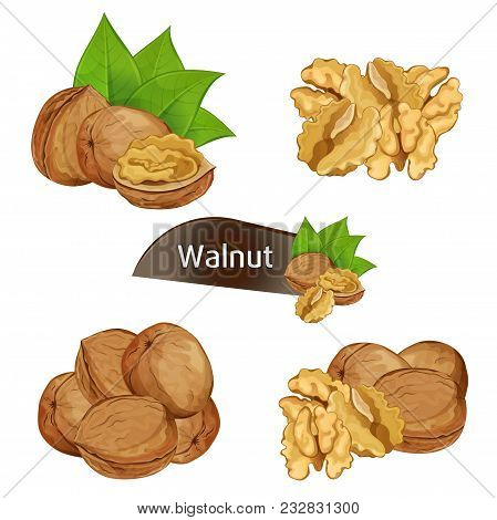 Walnut Kernel In Nutshell With Green Leaves Set Isolated On White Background Illustration. Organic F
