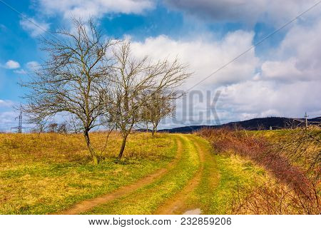 Road Through Orchard In Mountainous Rural Area. Lovely Countryside Springtime Scenery. Leafles Trees