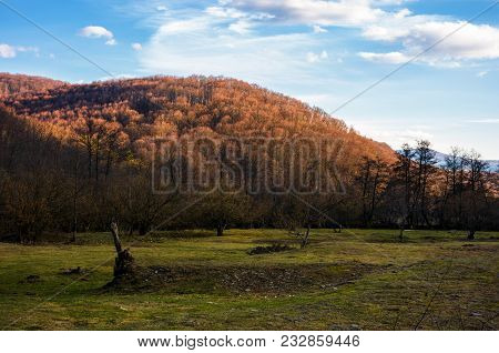 Grassy Meadow In The Shade Of A Mountain. Lovely Springtime Scenery With Leafless Forest On A Hill U