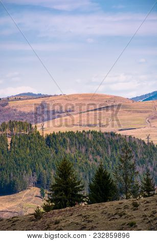 Spruce Forest On A Hillside In Springtime. Lovely Mountainous Landscape
