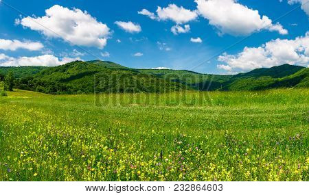 Beautiful Landscape With Meadow In Mountains. Wild Herbs On The Ground And Some Clouds On A Blue Sky