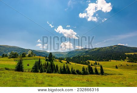 Beautiful Countryside Summer Landscape. Spruce Trees On A Rolling Grassy Hills At The Foot Of Borzha