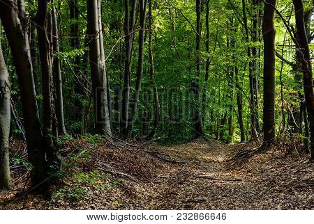 Road Through Forest Covered With Weathered Foliage. Beautiful Nature Scenery, Lovely Place For A Wal