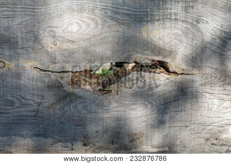 Crack In The Old Wooden Board Made Of Pine.