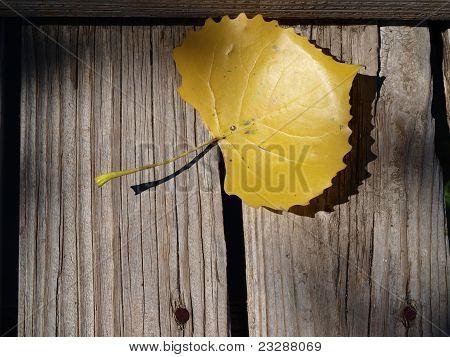 Blattgold auf warf