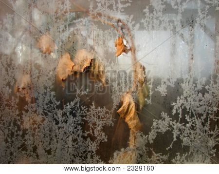Fading Plant Behind Frosty Window