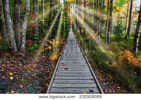 Boardwalk  in nature with sunrays