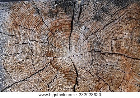 The Old Wood Texture With Natural Patterns. Cross-section Of The Old Tree. Texture Of Dark Wood. Nat