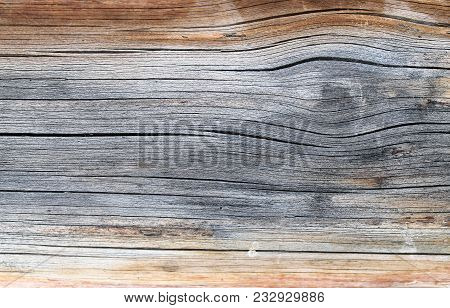 The Old Wood Texture With Natural Patterns. Inside The Tree Background. Old Grungy And Weathered Gre
