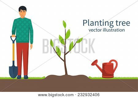 Planting Tree. Gardener With Shovel In Hand. Process Planting Concept. Gardening, Agriculture, Carin