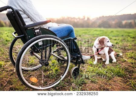 A Senior Woman In Wheelchair With Dog In Autumn Nature. Unrecognizable Senior Woman On A Walk On A G