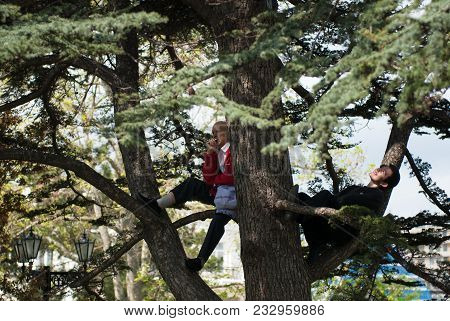 Young And Old Man Climbed High On Tree To See Russian Victory Day Military Parade , Crimea, Sevastop
