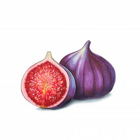 Figs On A White Background. Sketch Done In Alcohol Markers. You Can Use For Greeting Cards, Posters