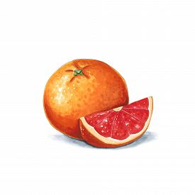 Orange Fruit On A White Background. Sketch Done In Alcohol Markets. You Can Use For Greeting Cards,