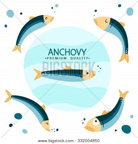 Anchovy Fish Vector Illustration. Small Salted Fodder Fish Of The Engraulidae Family. Peruvian Ancho