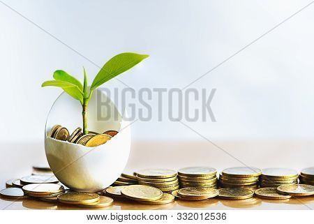 Hatched Egg And Coins With Small Plant Tree. Pension Fund, 401k, Strategies And Plan For Passive Inc
