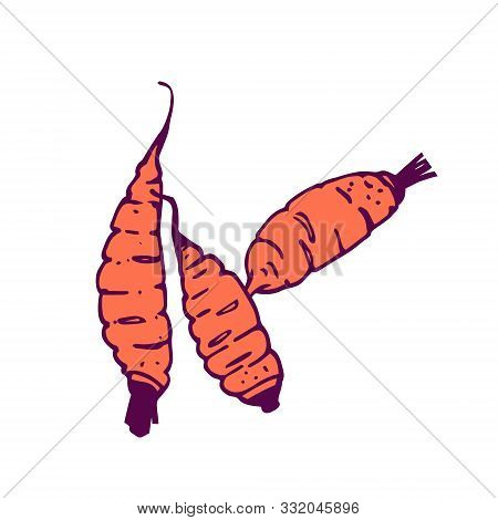 Three Carrots Illustration. Hand-drawn In Cartoon Style. Colored Artwork Isolated On White Backgroun