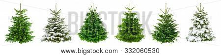 Set Of 6 Studio Shots Of Fresh Gorgeous Fir Trees In Lush Green For Christmas, Without Ornaments, Is