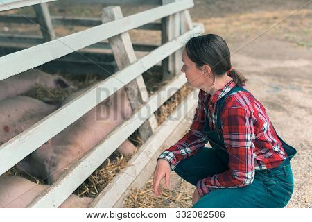 Farmer On Pig Raising And Breeding Farm. Female In Plaid Shirt And  Jumpsuit Overalls Jeans With Sus