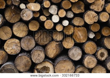 poster of Firewood stacked and prepared for winter Pile of wood logs. Pile of wood logs ready for winter. Wood texture background have many logs that cut from big trees and small trees.