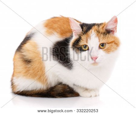 Happy Cat On A White Background. A Frustrated Cat