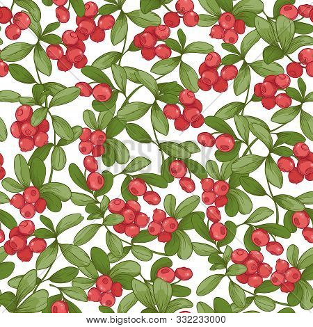 Cranberry. Seamless Pattern, Background. Graphic Drawing, Engraving Style. Vector Illustration Isola